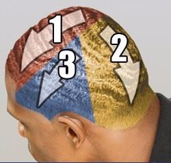 les différentes zones de brossage, constituant la totalité des angles nécessaire à la formation des waves